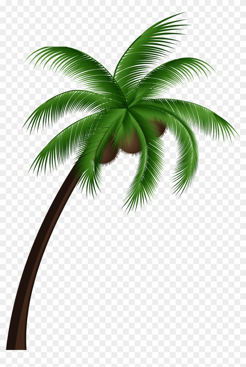 Coconut Palm Tree Png Clip Art - Coconut Tree With Coconut Png #152732