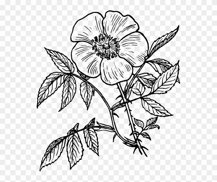 Flower Line Drawing Flowers Line Drawing Free Download Day Of The Dead Flower Drawings Free Transparent Png Clipart Images Download