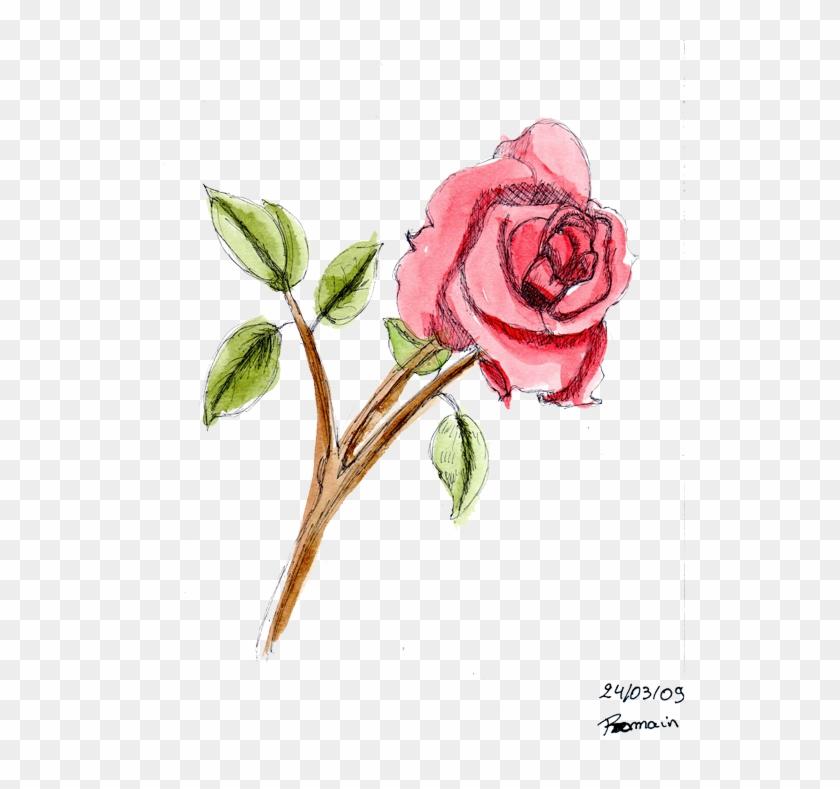 Beautiful Dessin De Rose En Couleur - Dessin D Une Rose En Couleur #815935