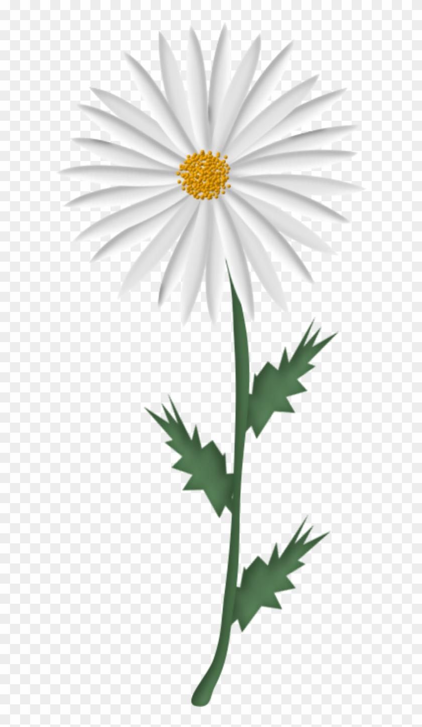 Dessin Marguerite Fleur Se Rapportant à Tubes Fleurs Picture Frame Free Transparent Png Clipart Images Download