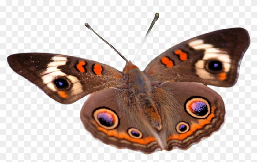 Insect Butterfly 1080p Desktop Wallpaper Flower Insect Butterfly 1080p Desktop Wallpaper Flower Free Transparent Png Clipart Images Download