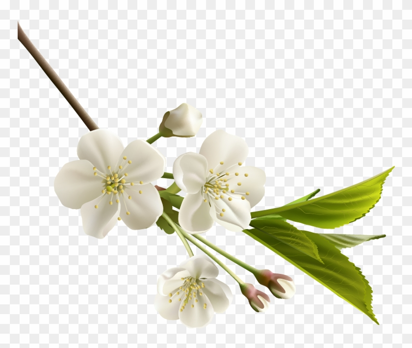 Png beautiful flowers white cherry blossom flower free png beautiful flowers white cherry blossom flower mightylinksfo