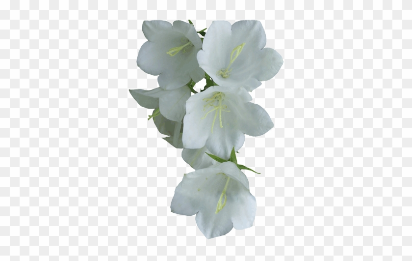 White flower png real white flower png free transparent png white flower png real white flower png mightylinksfo