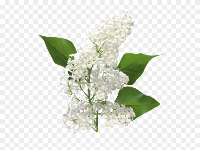 Tubes fleurs types of white flowers used in winter bouquet free tubes fleurs types of white flowers used in winter bouquet mightylinksfo