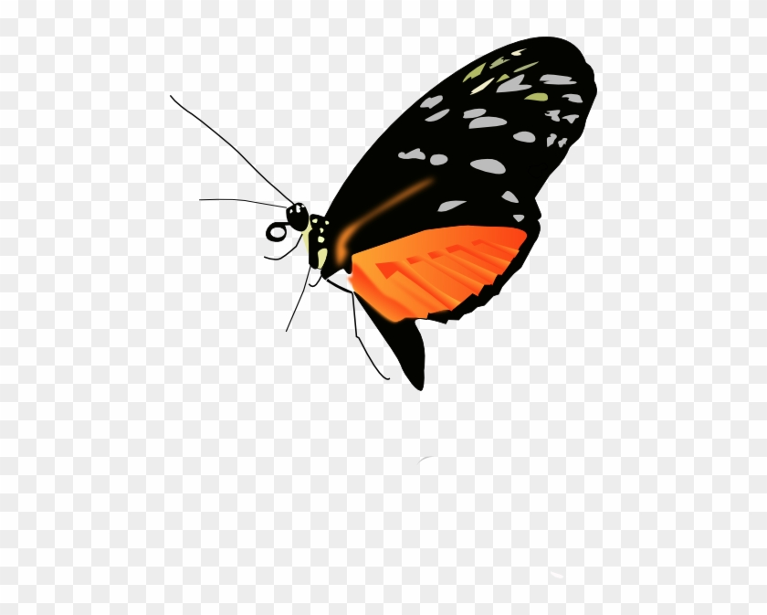Orange Butterfly Clipart For Kids - Butterfly Png Photo Black #824491