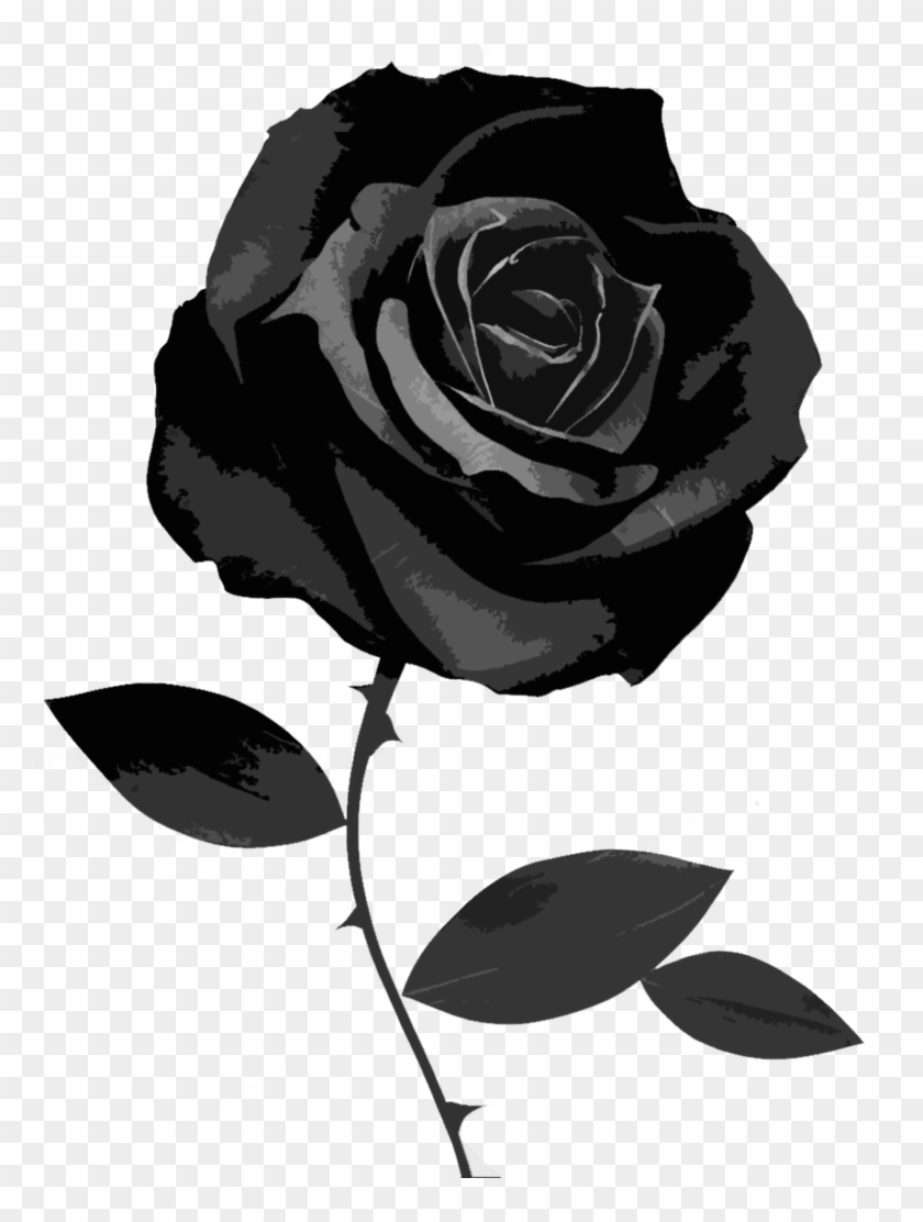 Black Rose 49 Best Hd Wallpapers Of High Quality Black Rose White Background Free Transparent Png Clipart Images Download