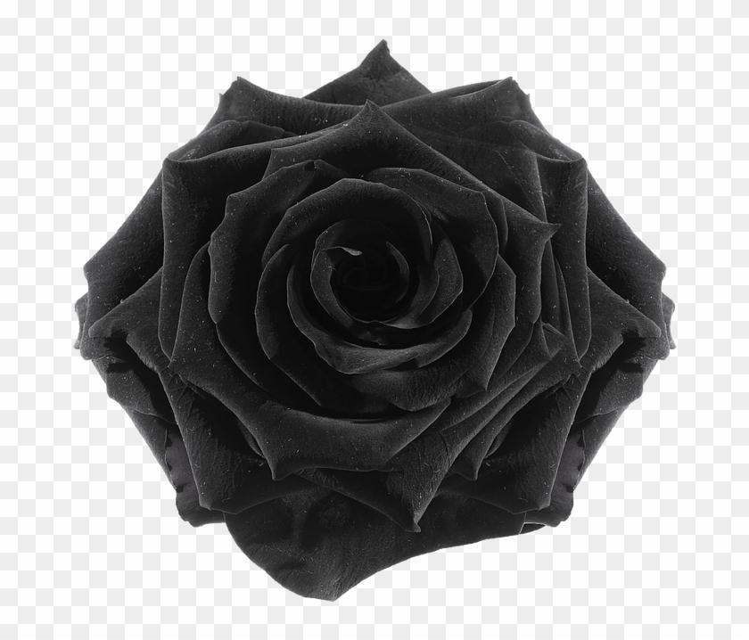 The Gallery For > Flower Tumblr Transparent Black - Rose #825583