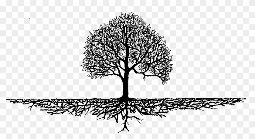 Roots Clipart Rooted Tree - Tree With Roots Graphic #827560