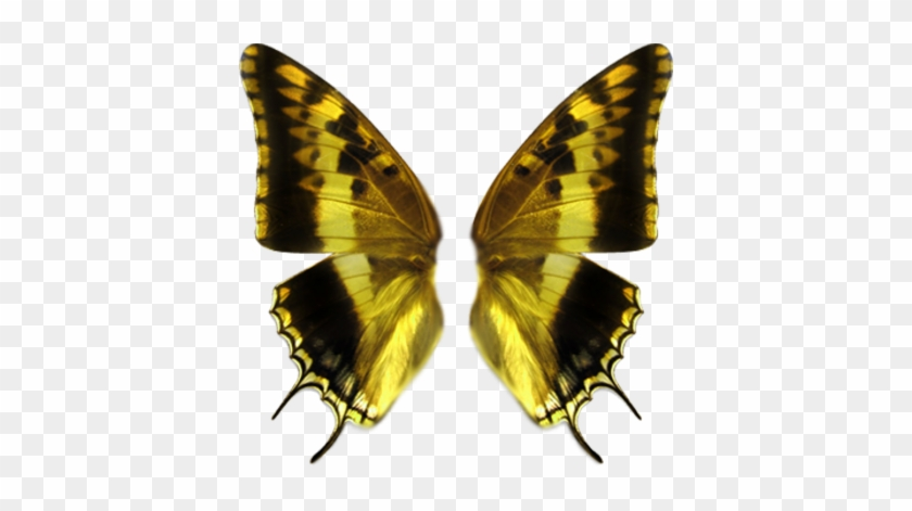 Http - //www - Officialpsds - - Butterfly Wings Transparent