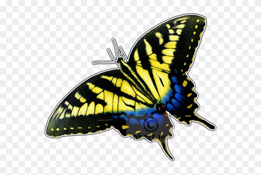 Eastern Tiger Swallowtail Butterfly - Eastern Tiger Swallowtail Butterfly #831588