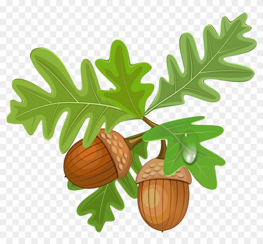 Transparent Leaves With Acorns - Oak Leaf And Acorn Clipart #835398
