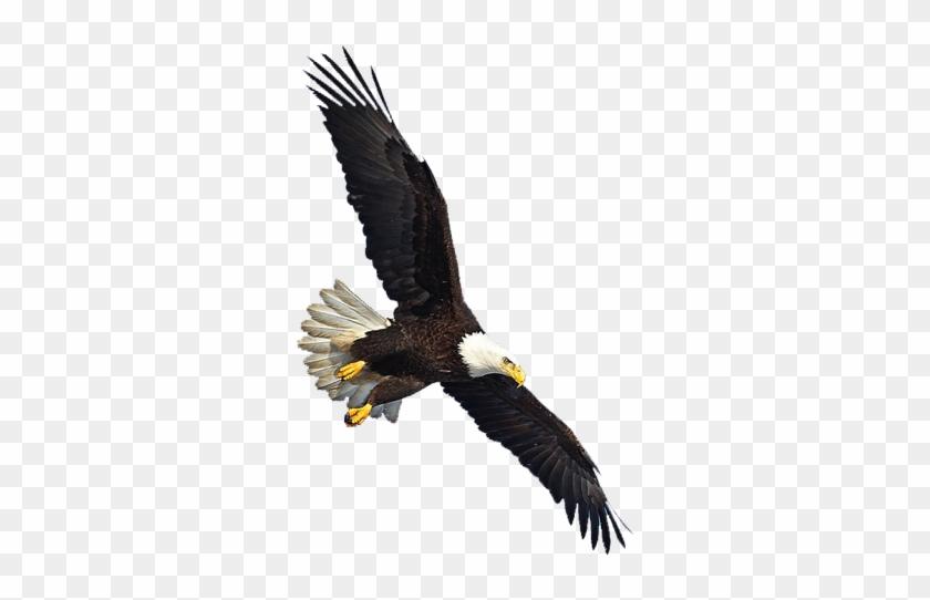 Eagle Png Image, Free Download - Eagles Flying Png - Free ...
