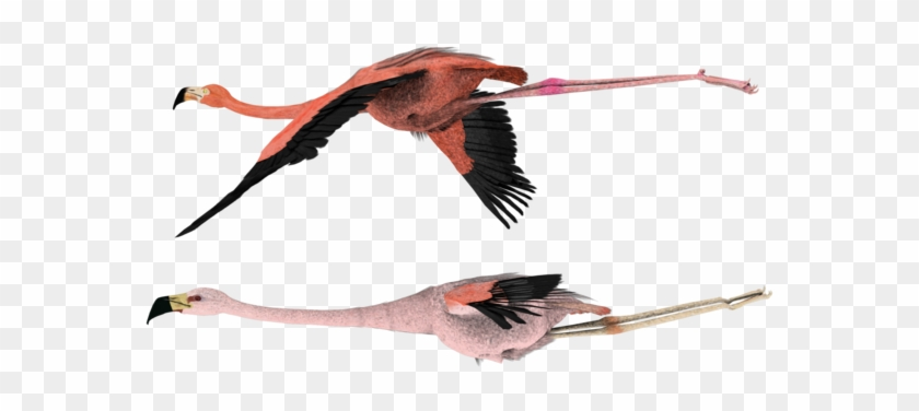 Flying Pink Flamingo Birds By Madetobeunique - Flamingo Bird Png