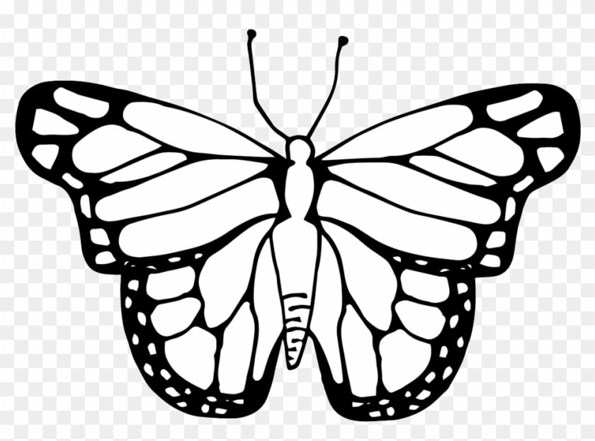 Life Cycle Of A Butterfly Clipart Black And White