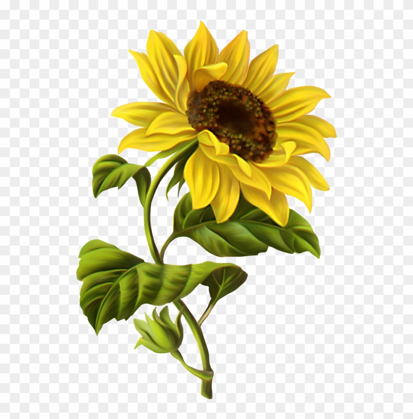 Vintage Sunflower Vector No Background Download ...