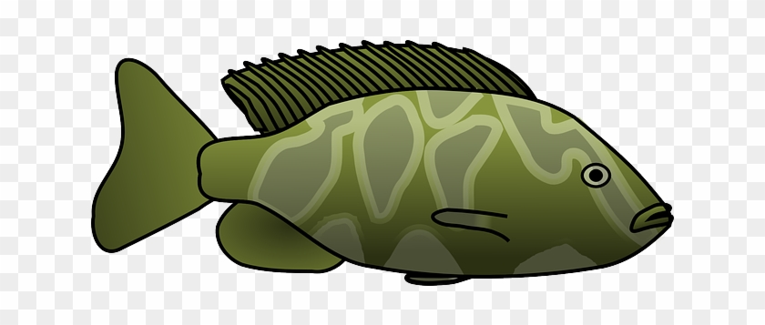 Fins Fish, Tropical, Animal, Tail, Fins - Green Fish Clipart Png #839901