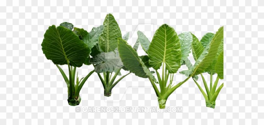 Plant Png 4 By Gareng92 On Deviantart Jungle Plants - Colocasia