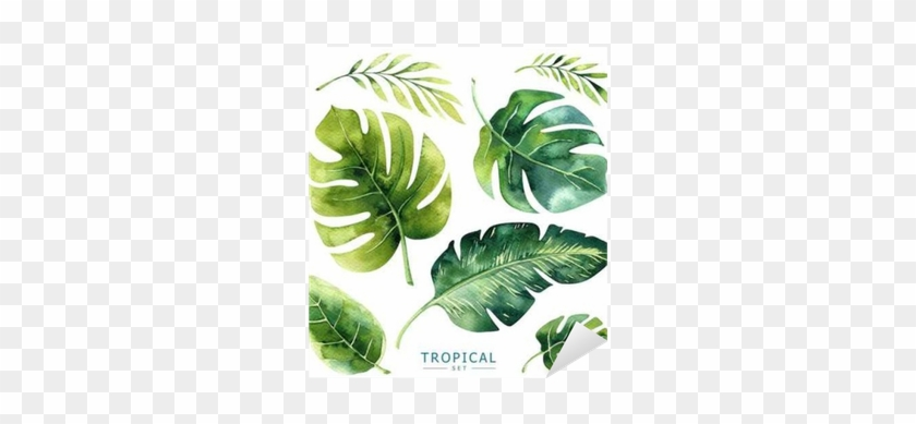 Hand Drawn Watercolor Tropical Plants Set - Exotic Palm Leaves #841830