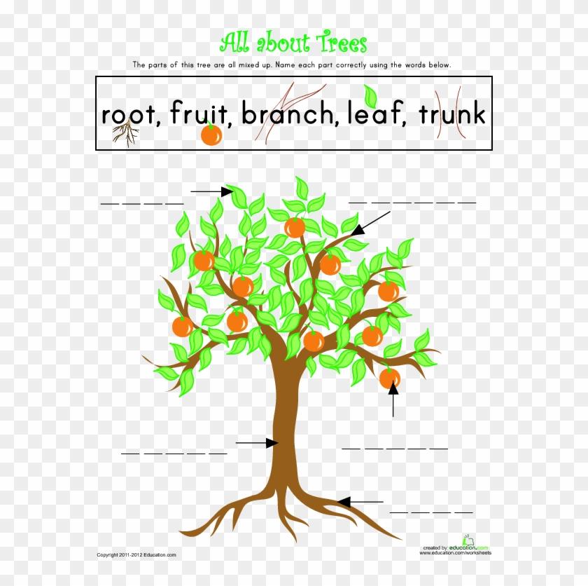 Parts Of A Tree Lesson Plan Education Com Rh Education - Parts Of A Tree #850071