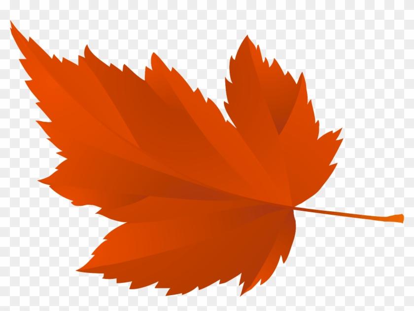 Осенние Листья Для Оформления Школьной Доски Или Группы - Tree Leaf #851989