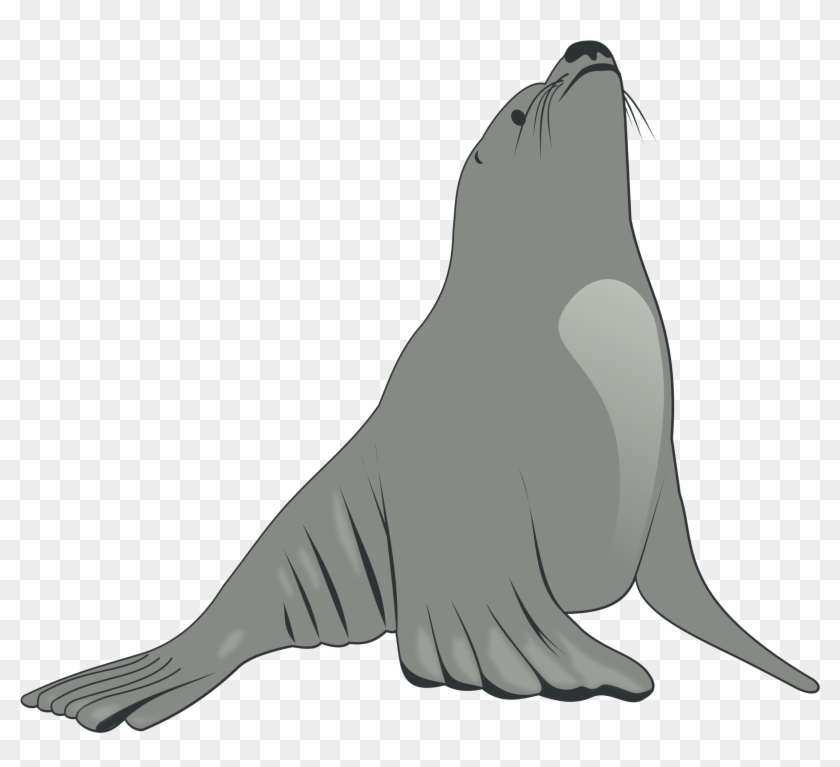 Sea Lion - Grey Sea Lion Shower Curtain #852038