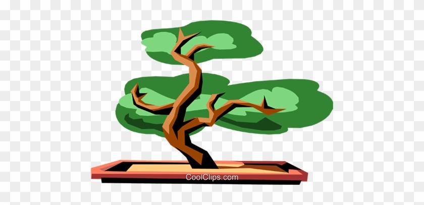 Bonsai Tree Clipart - Bonsai Tree Clipart #853210