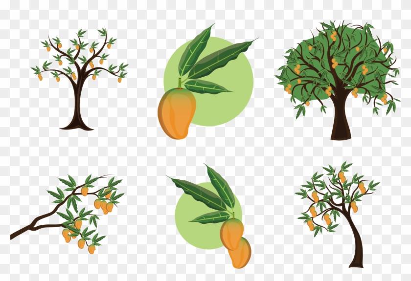 Mangifera Indica Mango Tree Clip Art - Mango Tree Illustration #860891