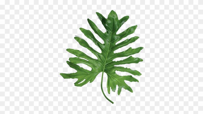 Statement Leaves - Large Leaf Tropical Plants #861195