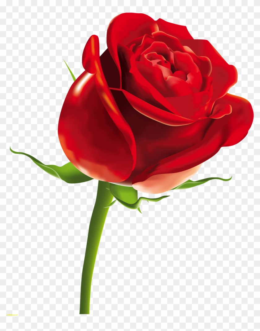 Red Rose Png Clipart Picture - Happy Women's Day Gif #157915