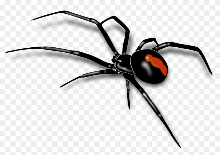 Clipart Info - Australian Red Back Spider #160790