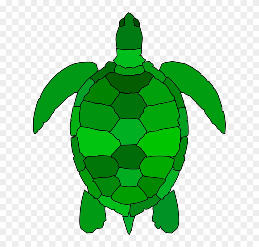 Turtle Animal Reptile ...