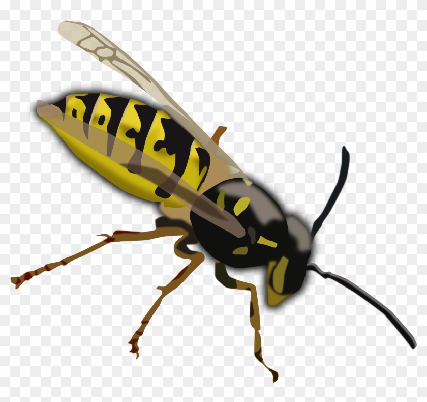 Top 91 Wasp Clip Art - Yellow And Black Insect With Wings #162957
