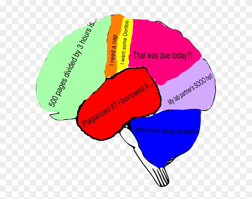 Freshman Fear Brain 5 Clip Art - Brain Clipart With Labels #163687