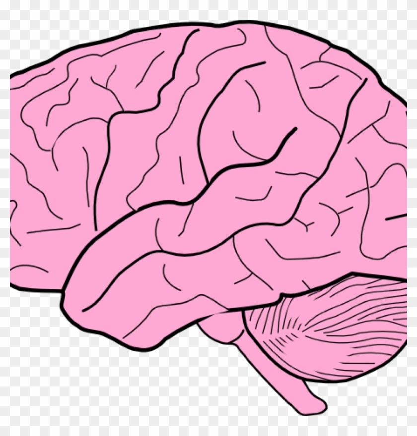 brain clipart brain clip art at clker vector clip art blank brain rh clipartmax com clip art brain cartoon clipart brain