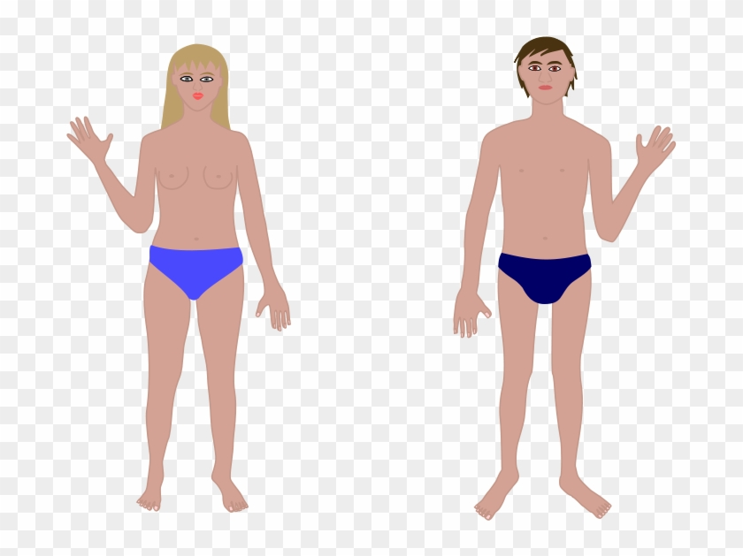 human body man and woman clip art human body vectors free free transparent png clipart images download human body man and woman clip art