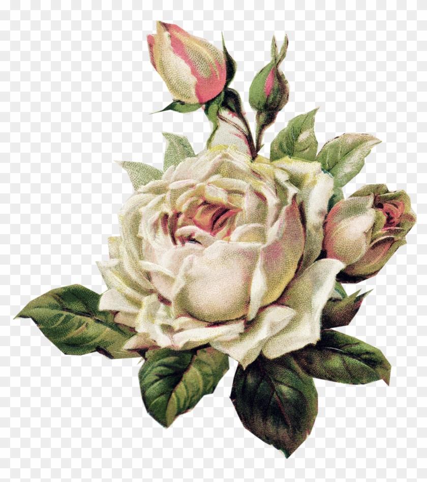 Vintage White Rose Vintage White Rose Png Free Transparent Png
