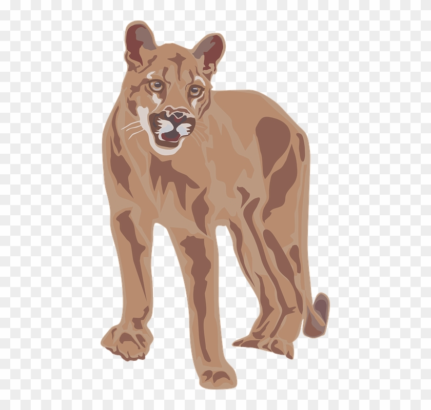 Mountain Lion Clipart - Mountain Lion Clipart #868951