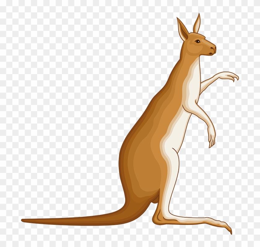 Animated Australian Animals 4, Buy Clip Art - Coat Of Arms Kangaroo #869777