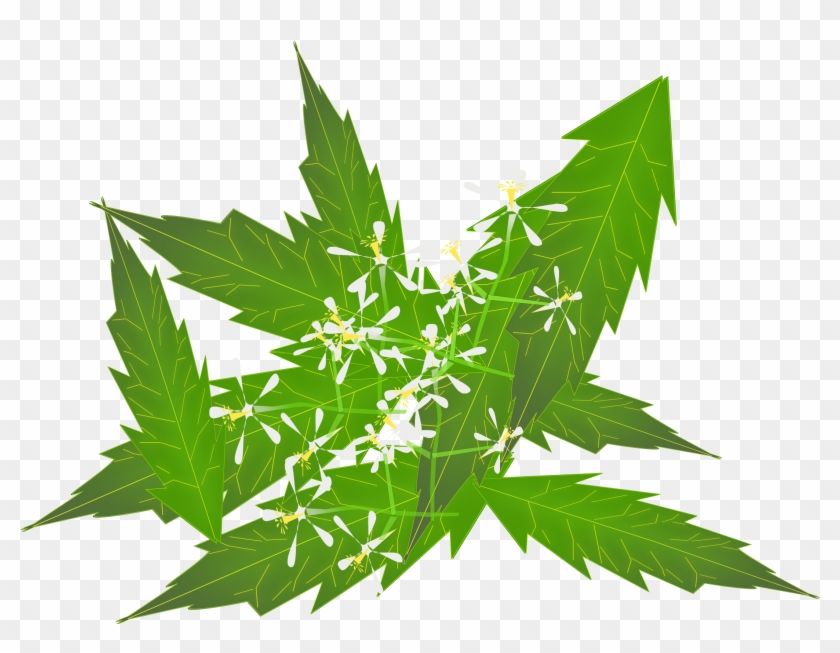 Big Image - Use Neem Leaves For Hair - Free Transparent PNG