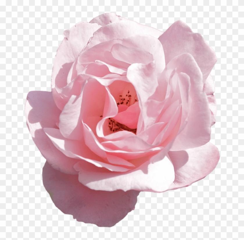 Transparent Flower Crown Tumblr Images Flower Wallpaper