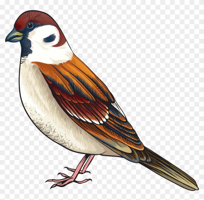 Goldfinch Clipart Maya Bird 622608 5587489 Clipart - Bird Clipart Png #882855