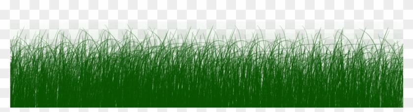 Cds - Gambar Animasi Rumput Bergerak #884772