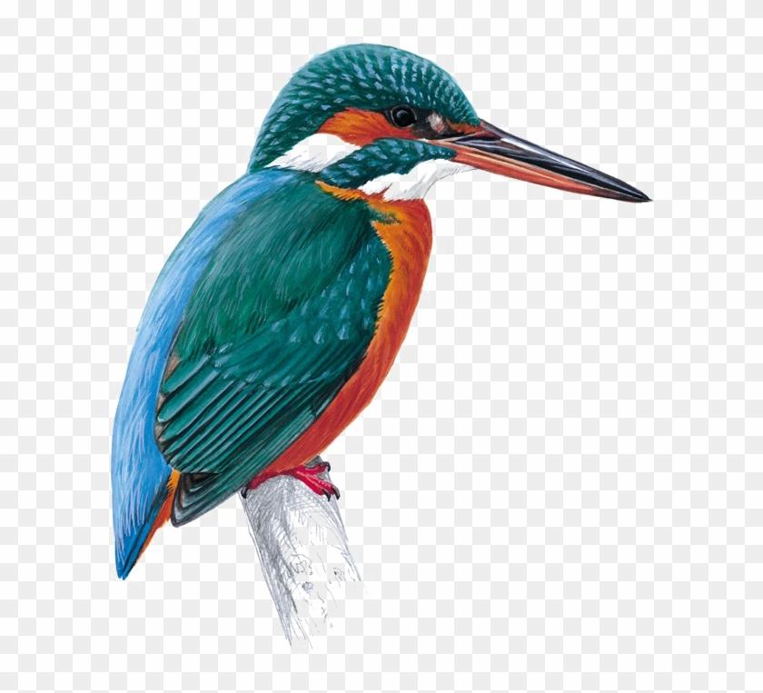 Kingfisher Png Free Download Kingfisher Totem Free Transparent