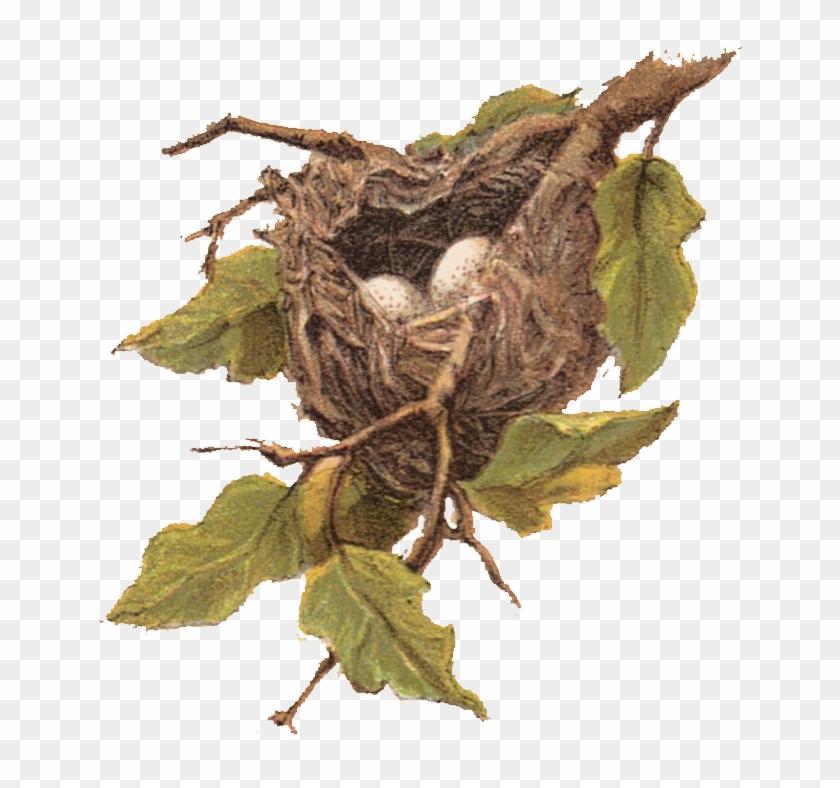 Free Vintage Clip Art Nest With Eggs - Bird Nest Clip Art #892729