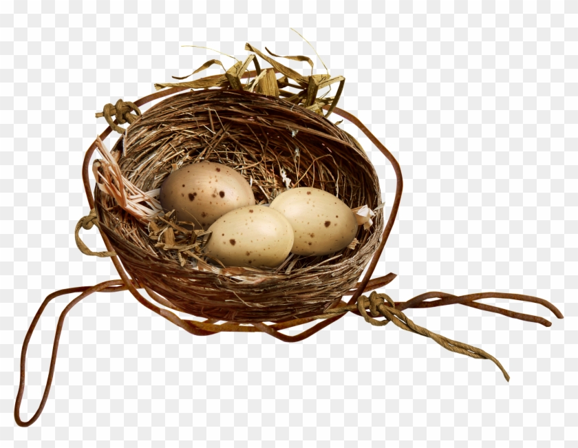 Bird Nest Egg Clip Art - Bird Nest #892734