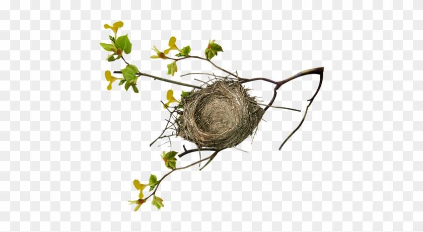 Birds Nests - Bird Nest On Tree Png #892925