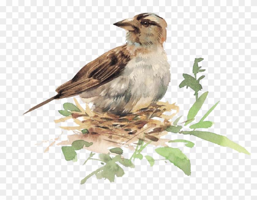 Bird Watercolor Painting Illustration - Illustration Bird In Nest #892951