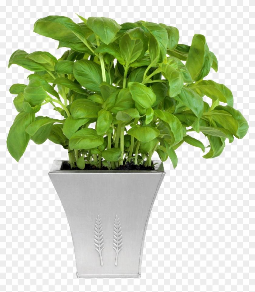 Maceta De La Planta De Cono Jardín - Flower Plants In Pot #893549