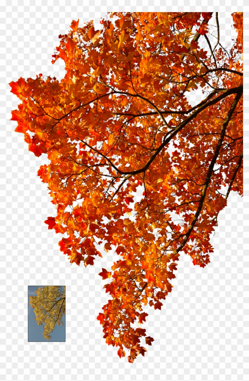 Autumn Leaves 2 Stock By Astoko Autumn Leaves 2 Stock - Autumn Tree Branch Png #894254