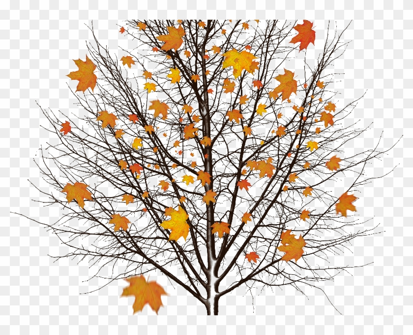 Autumn Tree With Leaves Isolated Object Png - Oprint Tree In The Snow Shower Curtains O 48x72inch #894306